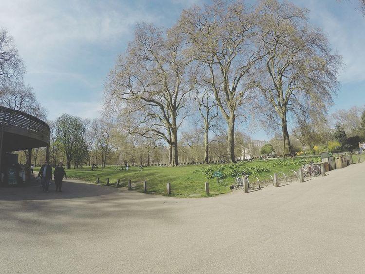 Taking Photos St James Park London  Nature Photography