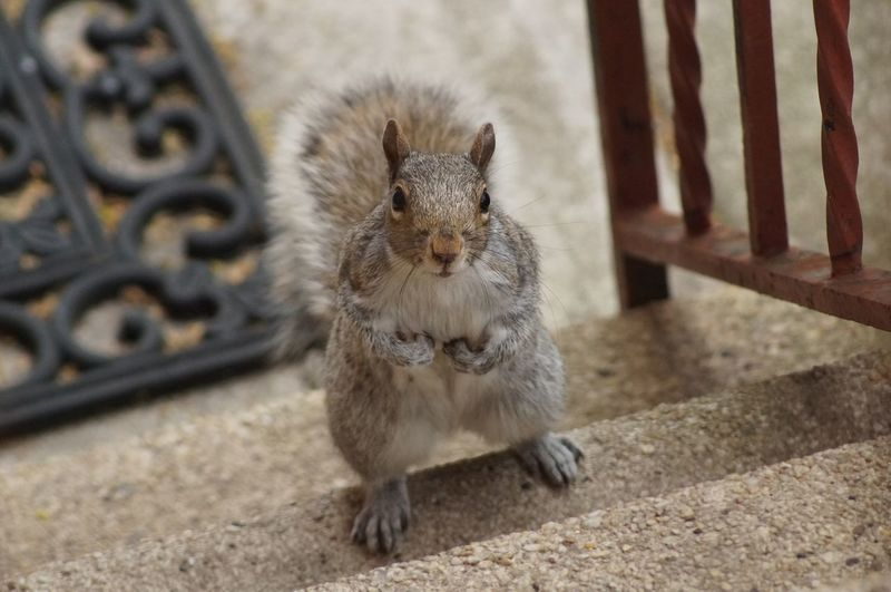 Squirrel Cute Akward Spring Stairs Food Nature