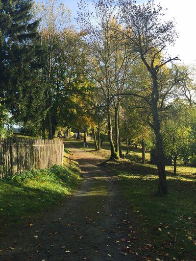 Herbst am Bauernhof. Nature Natural Beauty Fichtelgebirge Autumn Trees