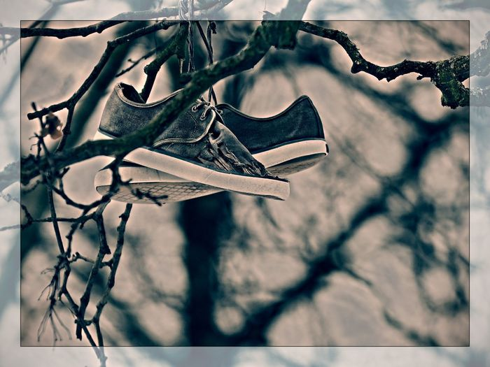 Bare Tree Branch Close-up Day Flying Shoes Focus On Foreground Intresting Low Angle View Nature No People Outdoors Plant Shoes Of The Day Shoes On Tree Sky The The Shoes Tree