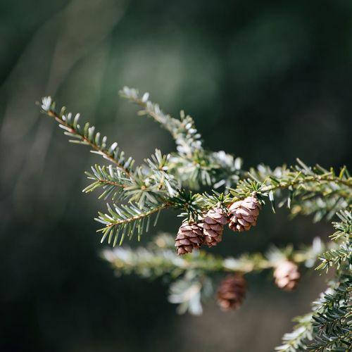 Beginnings Bokeh Botany Branch Freshness Growth Leaf Nature Selective Focus