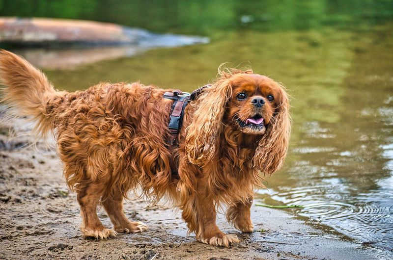 View of dog standing in lake
