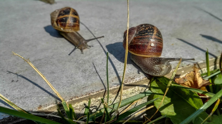 Animal Animal Themes Animals Animals In The Wild Close Up Close-up Day Escargot Flying Focus On Foreground Insect Macro Nature No People One Animal Outdoors Plant Selective Focus Shell Snail Snails Snails🐌 Snail🐌 Wildlife Zoology