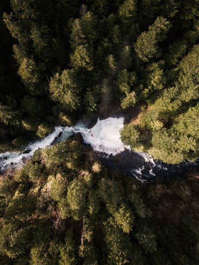 The River Runs Through It (Find me on IG @noeldxng) River Aerial View Landscape Washington Spiritfalls DJI Mavic Pro Dronephotography Drone  Waterfall Kayak Kayaking River Columbia River Gorge Travel Destinations Tourism Forest Day Outdoors Nature High Angle View Sunlight Tree Tranquility Beauty In Nature Backgrounds Water