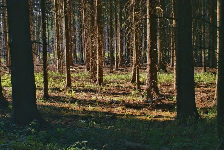 Forest Trees Adventure Outdoors The Great Outdoors - 2016 EyeEm Awards Arbres Nature Buetiful Botanic Plants Outdoor Sunrise The Essence Of Summer- 2016 EyeEm Awards