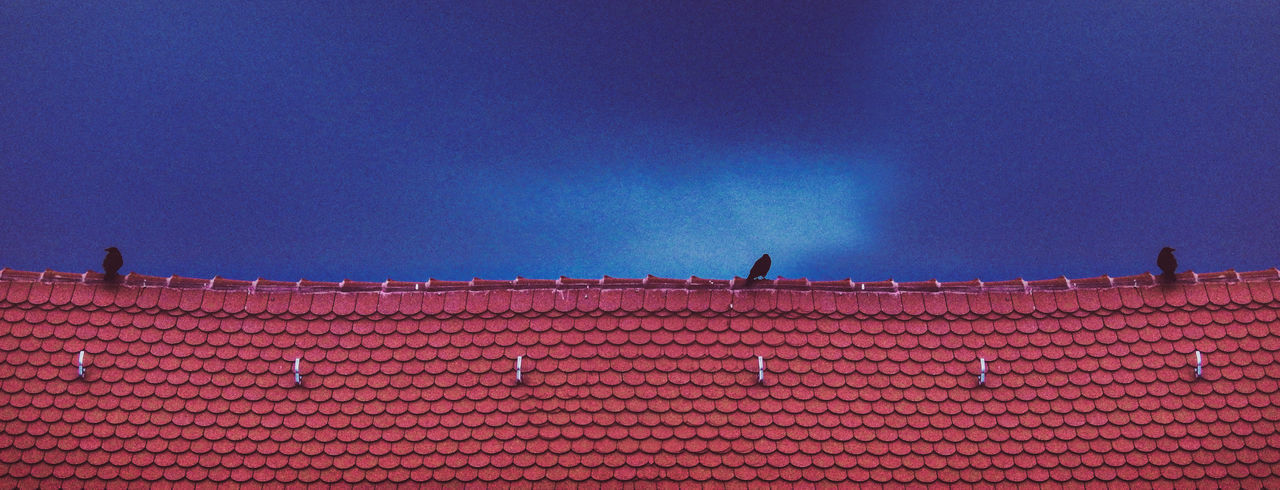 Low angle view of bird perching on building against blue sky