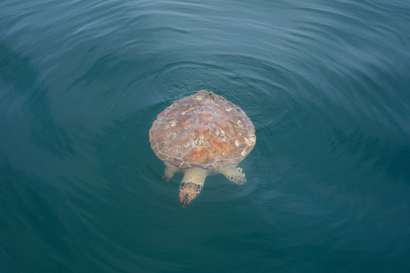 View of a turtle underwater