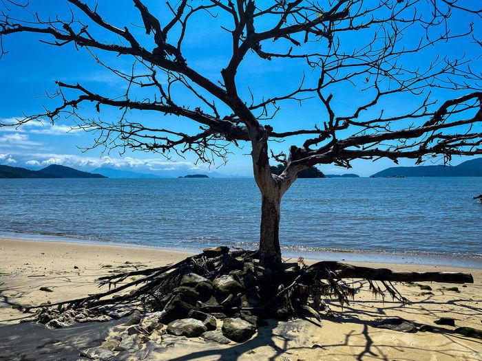 Bare tree on beach against sea