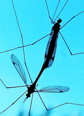 Cable Electricity  Insect Animal Themes One Animal Blue Animal Wildlife Animals In The Wild Power Supply No People Connection Concentric Outdoors Nature Day Perching Dragonfly💛 Dragonfly Nature Insects Beauty In Nature Nature Sky Animal Capture The Moment My Year My View Art Is Everywhere