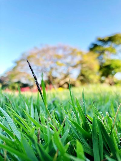 Plant Growth Green Color Nature Beauty In Nature Land Field