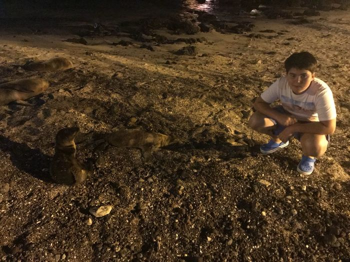 Baby sea lions Crouching One Person Mud Sand Outdoors Digging Day Full Length Childhood Nature People Adult An Eye For Travel Stories From The City