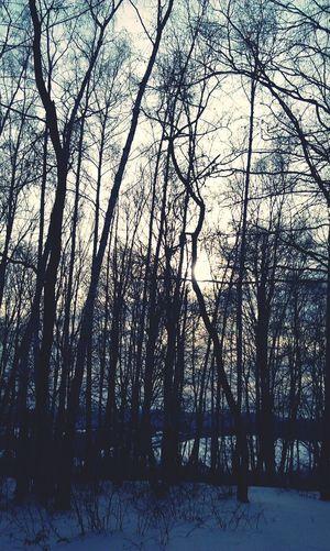 лес...