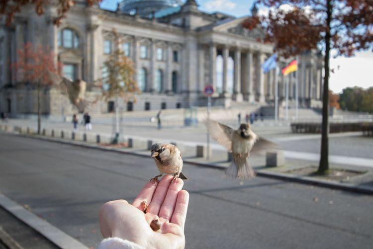 Man Feeding Birds In City