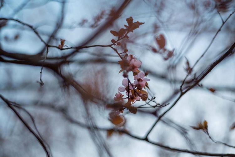 Springtime TheWeekOnEyeEM Springtime