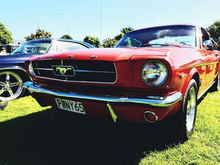Mustang ..