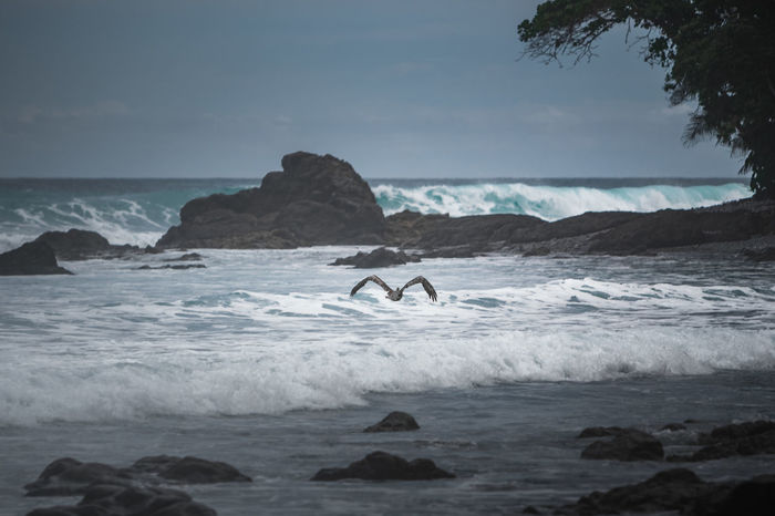 Matapalo beach near the Corcovado National Park of Costa Rica and a pelican. Blue Tones Jungle Beach Rough Sea Seashore Tranquility Beach Beach Wildlife Carribean Horizon Over Water Jungle Mist Moody Nature Outdoors Pelican Rock - Object Scenics Sea Sea Mist Tranquil Scene Water Wave Wildlife Been There.
