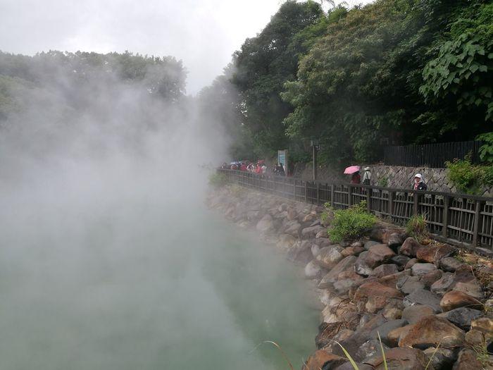 Water Tree Fog