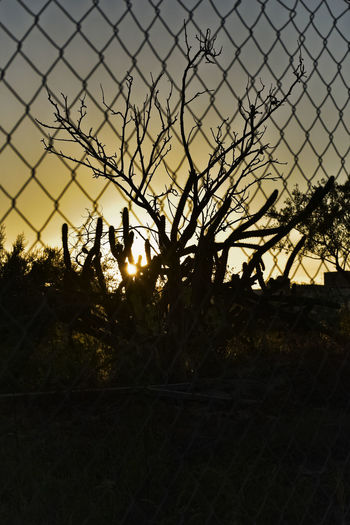SILUETAS Y ALAMBRE Abandoned Places Silouette & Sky Sunset Silhouettes Sunset_collection Growth Landscape Nature No People Outdoors Protection Silhouette Sky Sunset Tree Wire Fence Close Up,