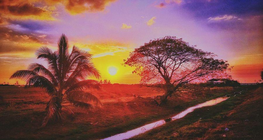 Sunset Landscape Rice Field At Alor Setar Malaysia EyeEm Selects