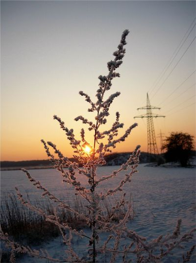 Eisblumen im Sonnenuntergang Frost Beauty In Nature Clear Sky Cold Temperature Day Growth Nature No People Outdoors Plant Scenics Sea Sky Sun Sunset Tranquil Scene Tranquility Water Winter