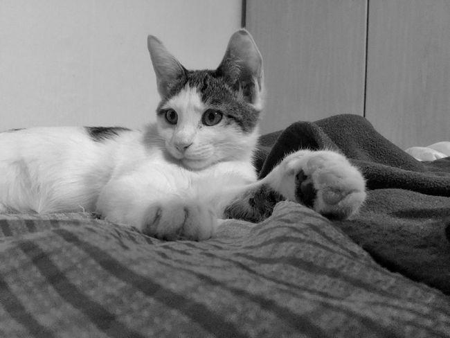 Cat Kitty Korean Shorthair First Eyeem Photo