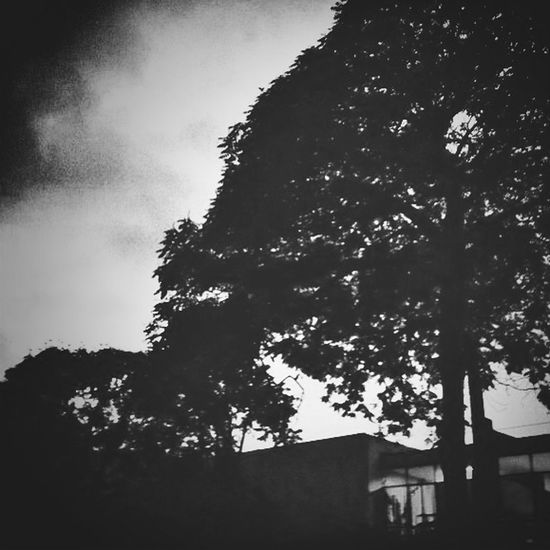 Landscape blackandwhite tree