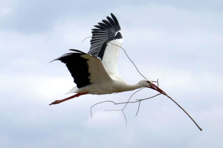 Storch / Storck