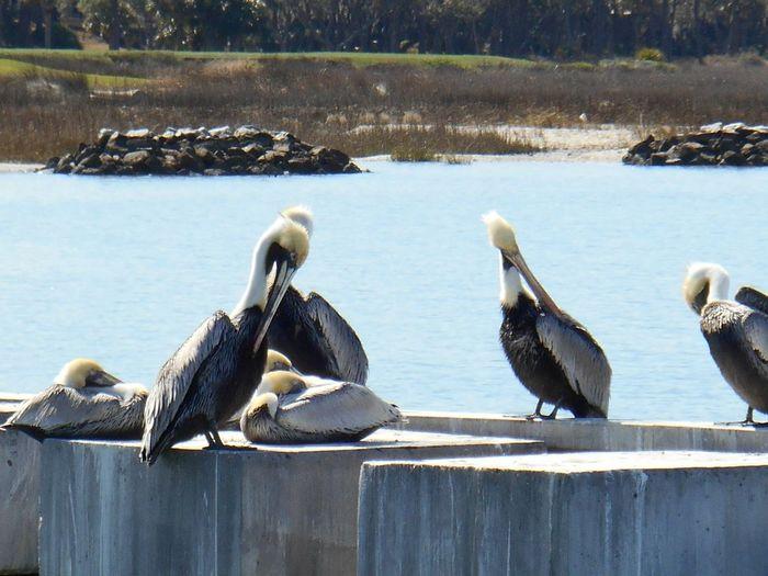 SC Hilton Head Island