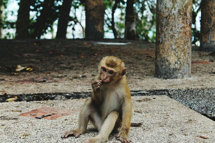 Portrait Of Sitting Monkey