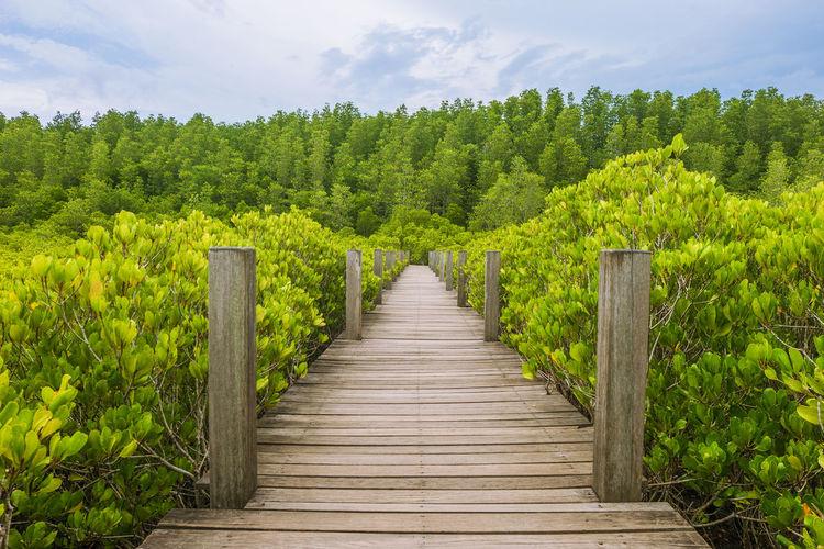 Bridge Mangrove