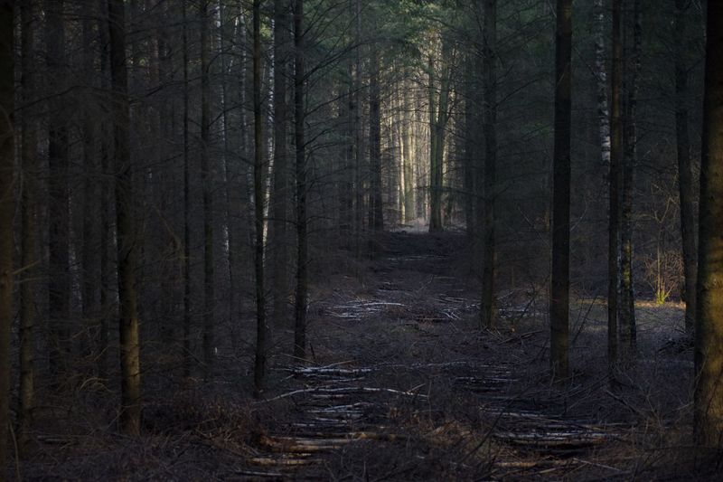 the way to the light🤩 Tree Forest Land Plant WoodLand Tranquility No People Tree Trunk Trunk Tranquil Scene Scenics - Nature Nature Non-urban Scene Beauty In Nature Growth Direction Day Dark Environment The Way Forward