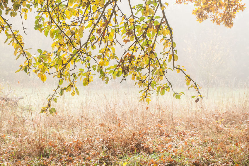Autumn Colors Beauty In Nature Branch Close-up Day Fog Freshness Growth Landscape Leaves🌿 Nature No People Outdoors Plant Scenics Sky Southern Germany Tree