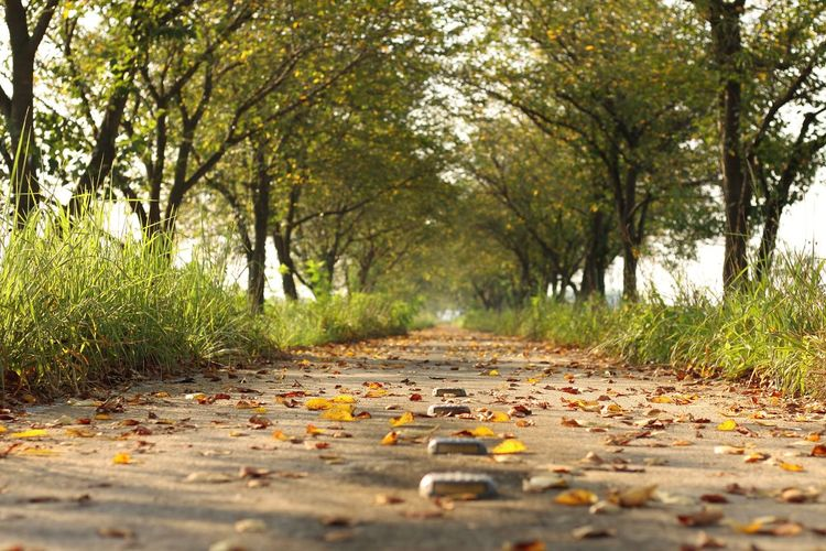 Surface level view of footpath with fallen dry leaves amidst trees in park