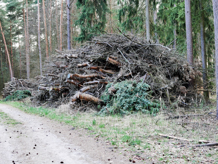 Branch Brandenburg Day Deforestation Destruction Forest Grass Growth Haufen Holz Holzhaufen  Holzwirtschaft Log Nature No People Outdoors Tranquility Tree Tree Trunk Unordnung Wald Waldspaziergang Waldsterben Weg Wood