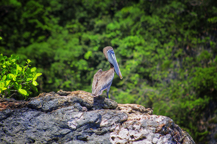 Animal Themes One Animal Animal Wildlife Animals In The Wild Animal Vertebrate Bird Rock Solid Rock - Object Perching Plant Focus On Foreground Nature No People Day Green Color Beauty In Nature Heron Tree My Best Photo
