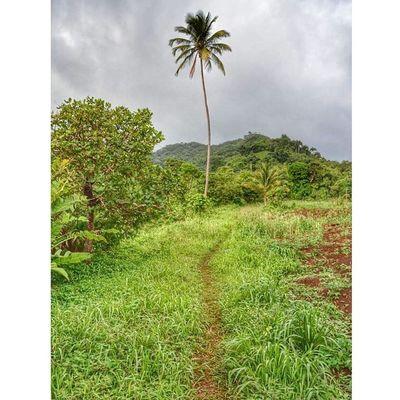 Ilivewhereyouvacation Caribbean_beautiful_landscapes Westindies_landscape Ig_caribbean Myhappyclicks Thebestpicsoftheearth Wu_caribbean Wu_europe Grenada GOLDENCLiCKS