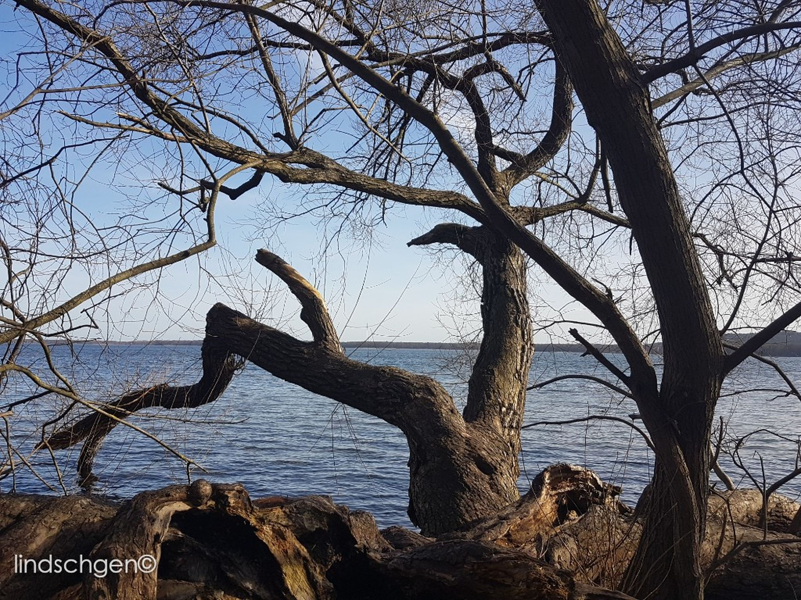 tree, branch, sky, nature, outdoors, no people, animal themes, beach, day, mammal