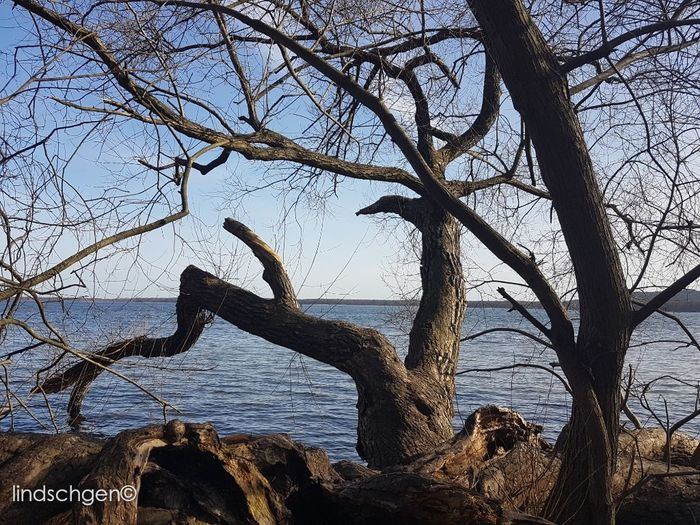 Impression Berliner Müggelsee Sea Horizon Over Water Nature Frühling EyeEm Best Shots EeYem Best Shots EyeEmBestPics EyeEm Nature Lover Nature In Beauty EyeEm Best Shots - Nature Beauty In Nature Nature Outdoors Naturelovers Glücklich Berlin Photography Berlin Season  See Müggelsee Baum 🌳🌲 äste