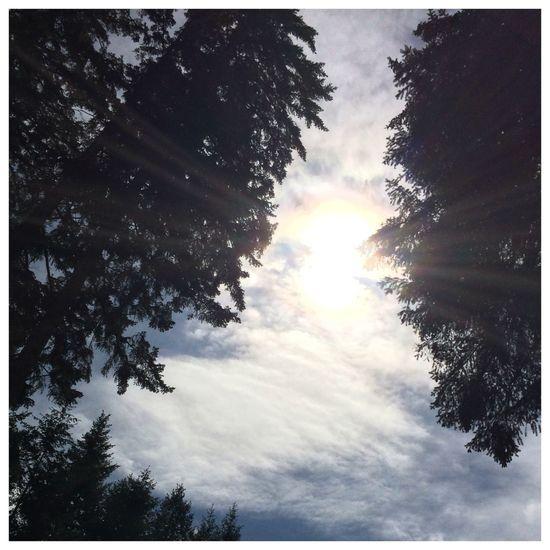 Original colours. Tree Sunset Forest Sunlight Sky Landscape Cloud - Sky The Still Life Photographer - 2018 EyeEm Awards EyeEmNewHere