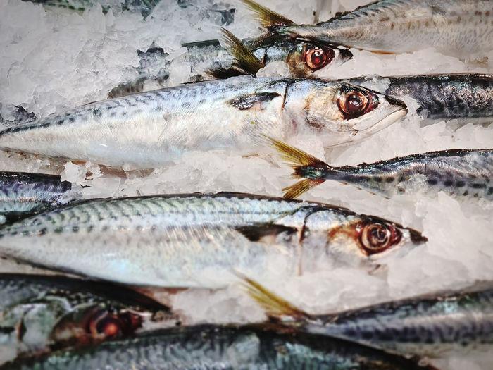 Close-up fresh mackerel fish in pile of ice