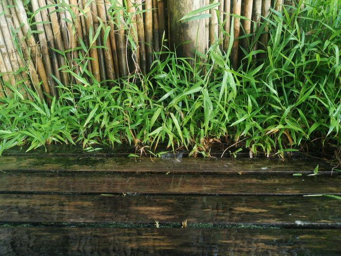 Close-up of bamboo plants in lake