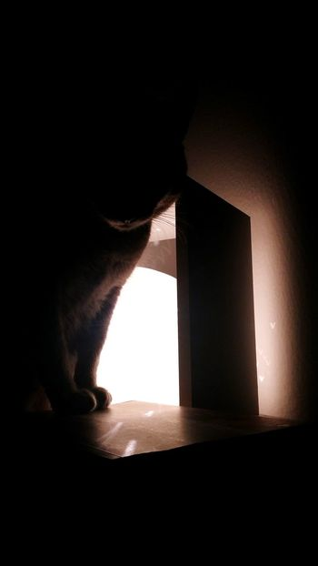 My cat trying to wake me up Cat Pet Waking Up Lamp Contrast Light Shadow Dark