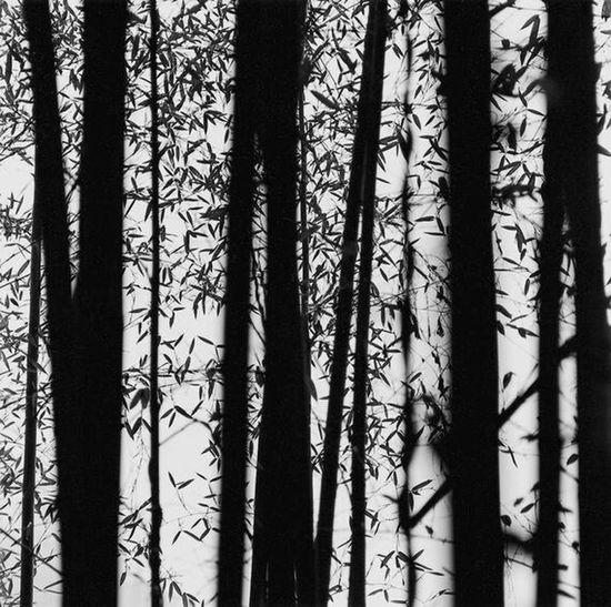 Bamboo Taking