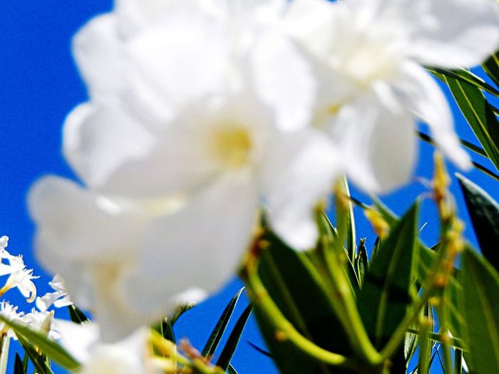 Spain♥ Blossoms  White Flower Andalucía Karen Grace