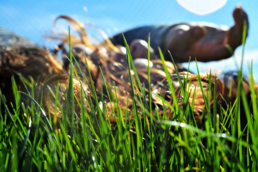 Collision with nature. Blue Sky Close-up Day Field Focus On Foreground Fragility Freshness Grass Green Growing Growth Immersion Nature Outdoors Person Selective Focus Sun Flare Woman Women Who Inspire You Color Of Life