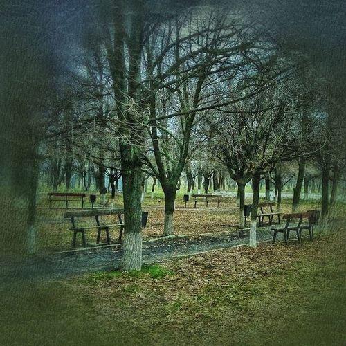 парк зелень