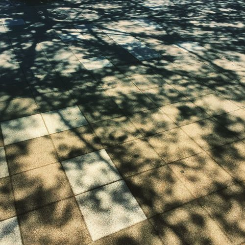 Full frame shot of tree shadow