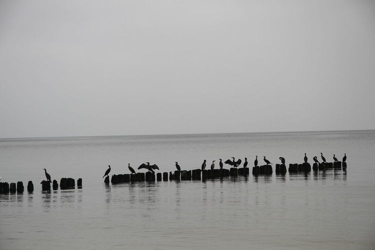 B&w Baltic Sea Bird Sea Side Sea View Sea Views Water Władysławowo