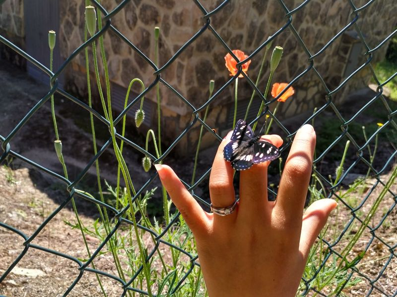 the hand of women with beautiful marry ring Tree Butterfly Chainlink Fence Close-up Day Diamond Fingers Flower Focus On Foreground Hand Holding Human Body Part Human Hand Leisure Activity Lifestyles Marry Metal Nail Nature One Person Outdoors People Real People Ring Women