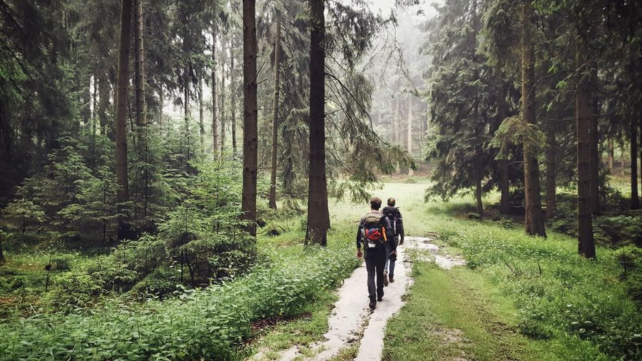 Rear view of hikers with backpack exploring forest
